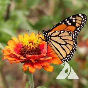 monarch-butterfly-mix