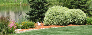 trees-shrubs1